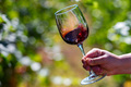 Hand holds glass with red wine next to grapes in vineyard - PhotoDune Item for Sale