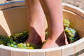 Close up of female feets crush grapes in a wooden tub - PhotoDune Item for Sale