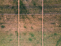 Aerial flat top view of a vineyard road in summer - PhotoDune Item for Sale