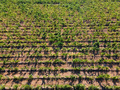 Aerial flat top view of a vineyard in summer - PhotoDune Item for Sale