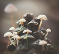 pincone Mushroom in forest - PhotoDune Item for Sale