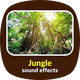Jungle Ambience Sound Effects