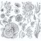 Set of Decorative Floral Elements for Design - GraphicRiver Item for Sale