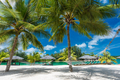 Palm trees and hammock on a tropical beach, islands of Vanuatu - PhotoDune Item for Sale