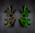 branches with mirror-like leaves - PhotoDune Item for Sale
