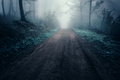 Mysterious haunted forest road with fog in late autumn - PhotoDune Item for Sale