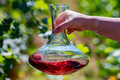 Hand holds decanter with red wine next to grapes in vineyard - PhotoDune Item for Sale
