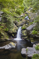Atlantic green rainforest with cascade and creek. Galicia, Spain - PhotoDune Item for Sale