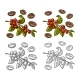 Coffee Branch with Leaf, Berry and Beans - GraphicRiver Item for Sale
