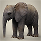 Low Poly Baby Elephant - 3DOcean Item for Sale