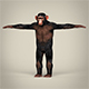Low Poly Chimpanzee - 3DOcean Item for Sale