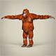 Low Poly Orangutan - 3DOcean Item for Sale