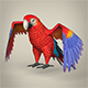 Low Poly Parrot - 3DOcean Item for Sale