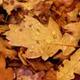 Dry Leaves Autumn Rustle Pack