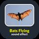 Bats Flying Sound