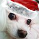 Christmas Logo 2 - AudioJungle Item for Sale