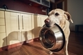 Hungry dog holding bowl and waiting for feeding - PhotoDune Item for Sale