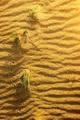 Yellow sand in desert - PhotoDune Item for Sale
