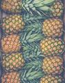 Fresh Market Pineapples - PhotoDune Item for Sale