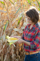 Middle age brunette caucasian female farm worker in glasses inspecting corn cobs - PhotoDune Item for Sale