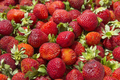Background Of Beautiful And Juicy Strawberries With Green Leaves. - PhotoDune Item for Sale