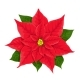 X-Mas Red Flower of Poinsettia - GraphicRiver Item for Sale