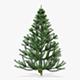 Conifer Tree 150cm v 1 - 3DOcean Item for Sale