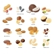 Nuts and Seeds - GraphicRiver Item for Sale