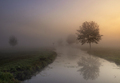 Misty morning near Giessenburg - PhotoDune Item for Sale