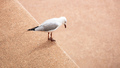 Seagull looks down from a wall - PhotoDune Item for Sale