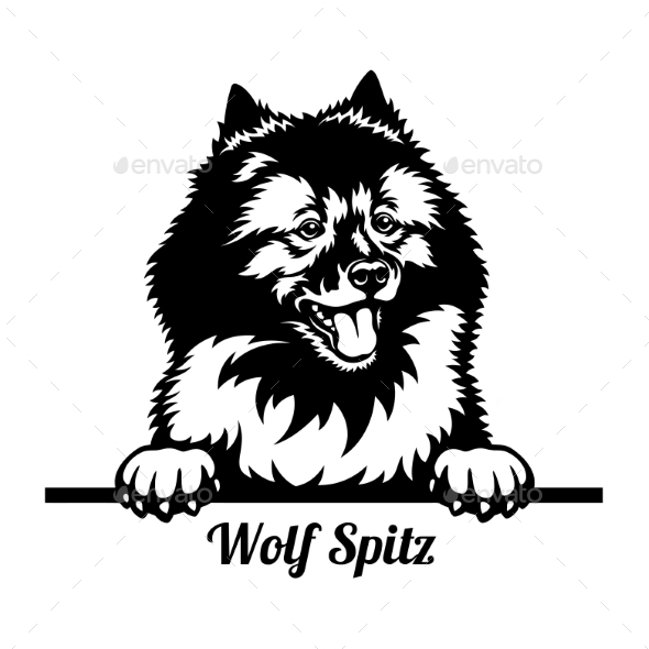 Wolf Spitz Peeking Dog - Head Isolated on White