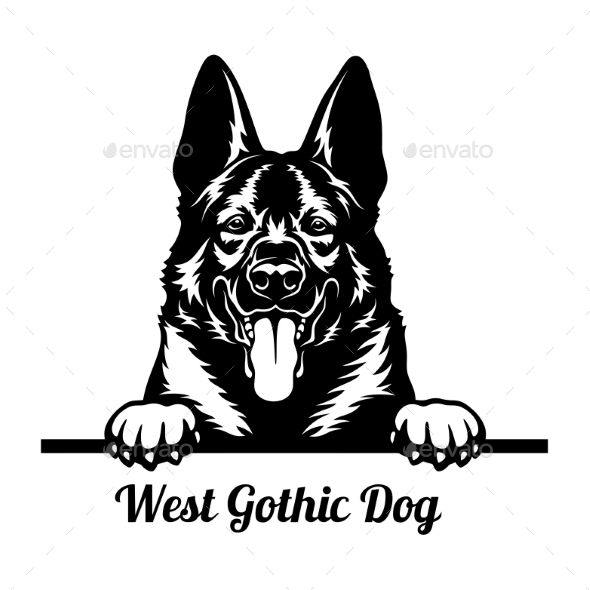 West Gothic Dog Peeking Dog - Head Isolated