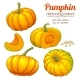 Pumpkin Plant Vector Set on White Background - GraphicRiver Item for Sale