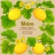 Melon Vector Frame - GraphicRiver Item for Sale