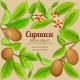 Cupuacu Vector Frame - GraphicRiver Item for Sale