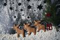 Santa reindeers made of gingerbread cookie - PhotoDune Item for Sale