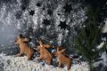 Three reindeer gingerbread cookies on powdered sugar - PhotoDune Item for Sale