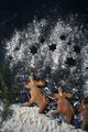 Vertical image of three reindeer gingerbread cookies - PhotoDune Item for Sale