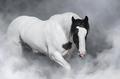 Portrait of Irish tinker horse. - PhotoDune Item for Sale