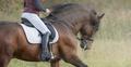 Horsewoman riding horse. - PhotoDune Item for Sale