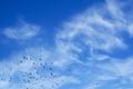 Flock of pigeons flying - PhotoDune Item for Sale