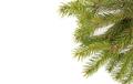 Christmas tree branche - PhotoDune Item for Sale