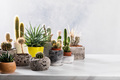 Collection of various cactus and succulent plants in different pots. - PhotoDune Item for Sale