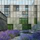 Lavender Tree - 3DOcean Item for Sale