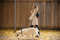 Attractive young woman walking with her lovely dog in the park in autumn. - PhotoDune Item for Sale