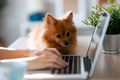 Lovely little dog looking the laptop while her young owner working with him in living room at home. - PhotoDune Item for Sale