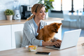 Cute little dog looking the laptop while her owner working with him in the kitchen at home. - PhotoDune Item for Sale