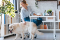 Attractive young woman caring her beautiful dog while working with laptop in living room at home. - PhotoDune Item for Sale