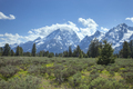 Grand Teton mountains rise above a meadow with pines on a sunny afternoon - PhotoDune Item for Sale