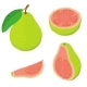Guava Icons Set Isometric Style - GraphicRiver Item for Sale